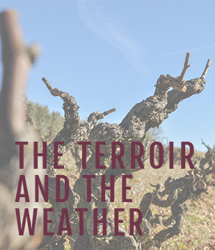 The terrain and the weather